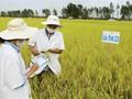 Bangunkan dan Kembangkan Brand-Brand Hasilan Khas di Daerah Dataran Rendah Sungai Mekong secara Berkelanjutan