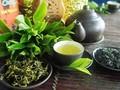 Thai Nguyen construye la marca de té Tan Cuong en asociación con el desarrollo turístico
