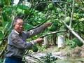 Ba Liêm, un membre du Parti dévoué
