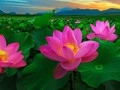 Perkenalan Sepintas tentang Mata Uang Kripto Digital Pi dan Bunga Nasional Vietnam