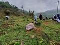 꽝빈성, 자인(Gianh)강 상류 조림 복원 사업