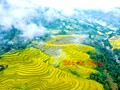 Festival of Hoang Su Phi terraced rice fields to open in September