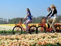 How cycling becomes a symbol of Dutch culture?