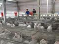 ウサギの飼育などで経済発展を遂げた青年たち