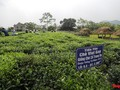 タンクオン茶の商標作りと観光発展を結びつける