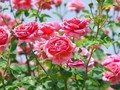 花にちなんだ愛の歌
