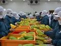 Augmentation des exportations de fruits et légumes