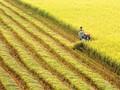 Un engagement de la Suisse pour la riziculture du Vietnam