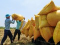 Rice exports cross 1 bln USD on higher prices