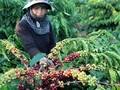 Việt Nam hợp tác mở rộng thị trường xuất khẩu nông sản thực phẩm