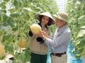 Hung Yen apuesta por la reestructuración agrícola