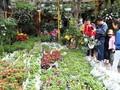 El mercado de Hang, un espacio cultural singular en el seno de Hai Phong
