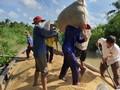 Una temporada de cultivo exitosa en el delta del río Mekong