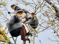 Việt Nam chủ động bước vào thời kỳ phục hồi hệ sinh thái