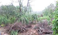 Dengan giat memulihkan produksi pertanian pasca bencana alam