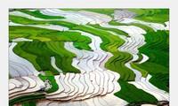 Keindahan Daerah Tay Bac pada Musim Air Tumpah