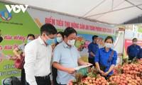 Kementerian Pertanian dan Pengembangan Pedesaan Vietnam Luncurkan Tempat Bantuan Pemasaran Hasil Pertanian yang Aman di Tengah Pandemi Covid-19