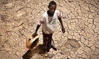 PBB Peringatkan 2,8 Juta Orang Hadapi Bahaya Kerawanan Pangan di Somalia