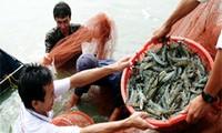 EEUU declara que camarones vietnamitas no violan leyes antidumping