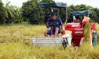 Vietnam prioriza inversiones en desarrollo agrícola