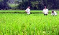 Provincia vietnamita impulsa desarrollo de producción agrícola de marca con indicaciones geográficas
