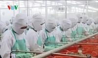 Vietnam considera a Asia como un mercado potencial de exportación de camarones