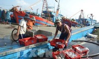 Vietnam refuerza el control de producción acuática de conformidad con las propuestas internacionales