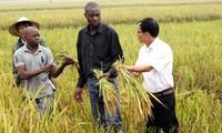 Por fortalecer cooperación económica entre Vietnam y África