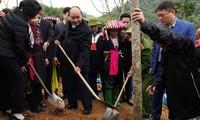 Localidades vietnamitas promueven Festival de Siembra de Árboles 2020