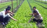 Vietnam por avanzar en la producción agrícola orgánica