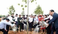 Continúan las actividades para cumplir el objetivo de sembrar mil millones de árboles en Vietnam