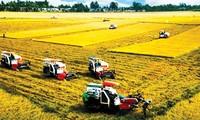 Vietnam favorece el desarrollo de la agricultura sostenible