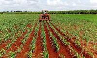 Cuba incentiva inversiones vietnamitas en agricultura y ganadería