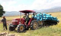 Cosecha abundante en los campos del distrito de Lak