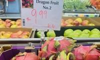 La pitahaya vietnamita conquista el paladar de consumidores australianos