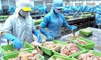 Esfuerzos del sector pesquero vietnamita por eliminar la tarjeta amarilla de la Unión Europea