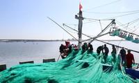 Esfuerzos de la industria pesquera de Vietnam por eliminar sanción europea