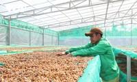 Esfuerzos del sector cafetero de Vietnam por reinventarse en el nuevo contexto
