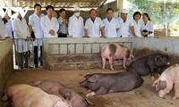 Promoción de la producción agrícola orgánica de Vietnam