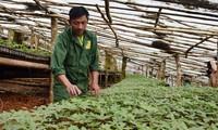 Firman un acuerdo sobre el desarrollo del ginseng vietnamita en el mercado internacional