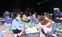 Promueven el comercio del mango verde de Vietnam en Australia
