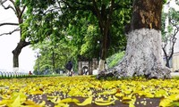 Canciones sobre el otoño