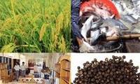 今年头5个月越南农林水产出口额同比增长10.1%