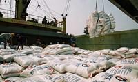 越南大米首次出口澳大利亚