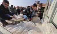 超1200万叙利亚民众处在粮食不安全状况