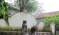 Le chien dans la tradition vietnamienne