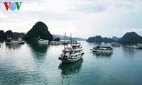 A la recherche de solutions pour traiter les eaux usées dans la baie d'Ha Long