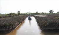 La salinisation dans le delta du Mékong diminue