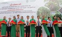 EVFTA : exportation du premier lot de fruits vietnamiens vers l'UE
