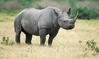 Compréhension orale: leçon 8: protéger des animaux sauvages au Vietnam
